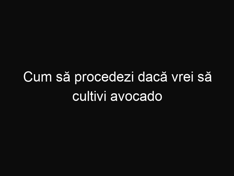 Cum să procedezi dacă vrei să cultivi avocado în propria ta locuință