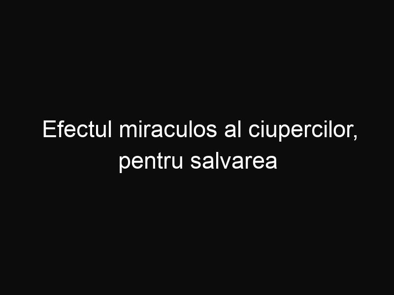 Efectul miraculos al ciupercilor, pentru salvarea lumii
