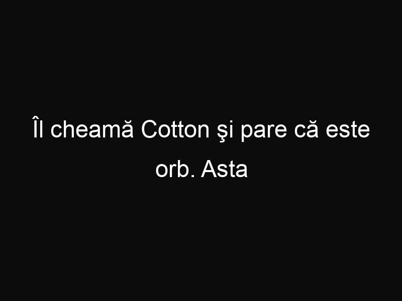 Îl cheamă Cotton şi pare că este orb. Asta până într-o zi când şi-a deschis ochii