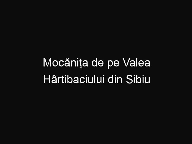 Mocănița de pe Valea Hârtibaciului din Sibiu este funcţională şi are un succes uriaş. Tu știai de ea?