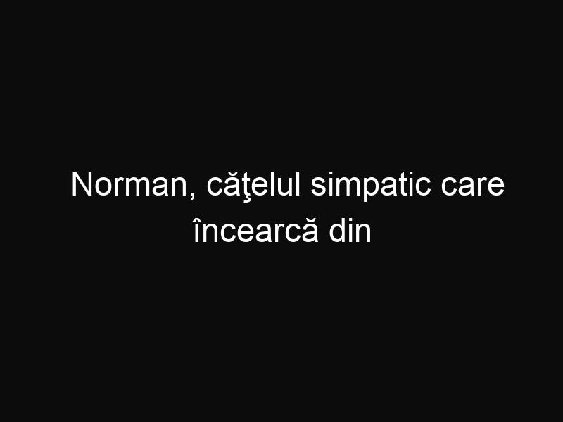 Norman, căţelul simpatic care încearcă din răsputeri să îşi oprească stăpânul din fredonat