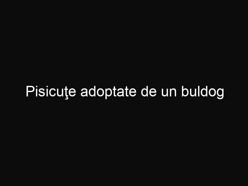 Pisicuţe adoptate de un buldog