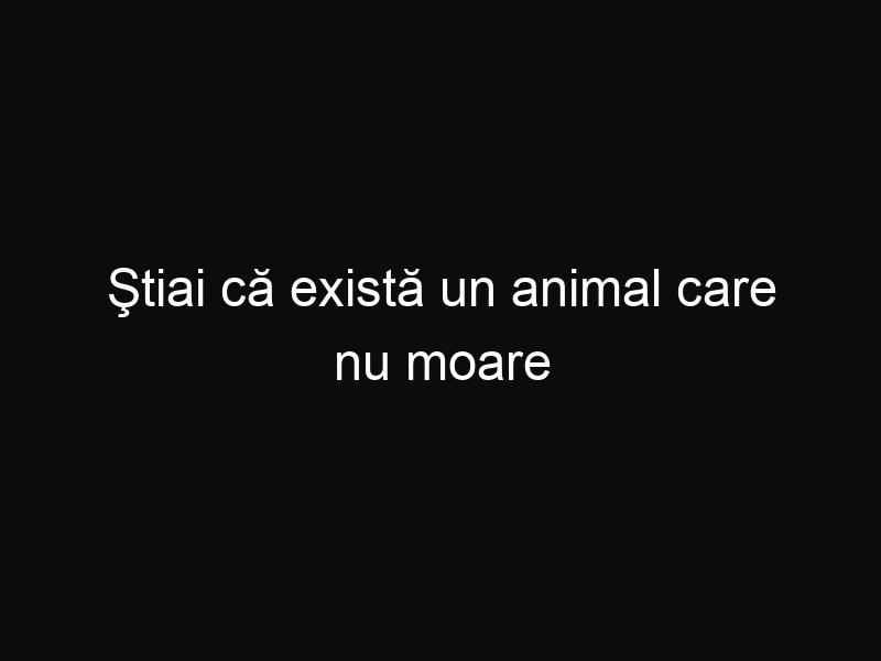 Ştiai că există un animal care nu moare niciodată? Află care este secretul acestuia!