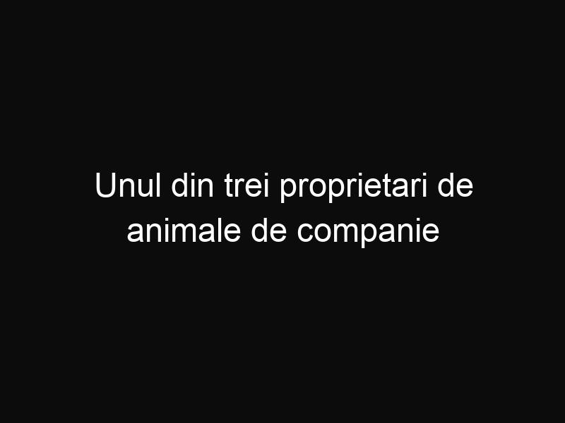 Unul din trei proprietari de animale de companie le pun pe acestea pe diverse reţele de socializare